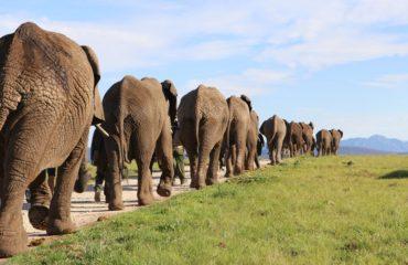 KNY-Knysna-Elephant-Park