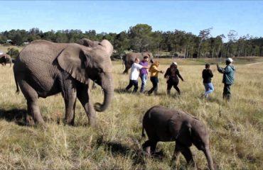 KNY-knysna-elephant-park2